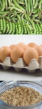eggs, whole grains and peas are great protein sources